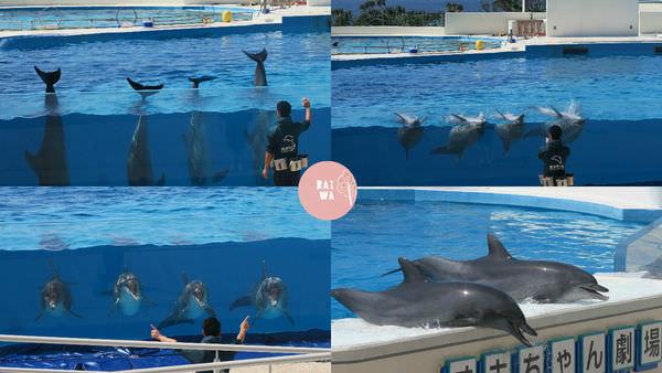 海豚2.jpg