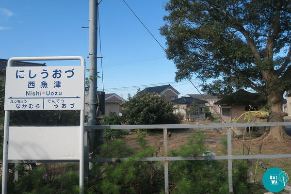 IMG_9350.JPG